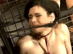 Sexy mistress Miho Lechter is playing with her slave