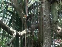 ATKGirlfriends video: Hope Howell is visiting the zoo with you in Singapore.